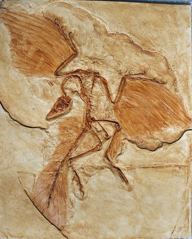 Berlin Archaeopteryx specimen. NP Collectables