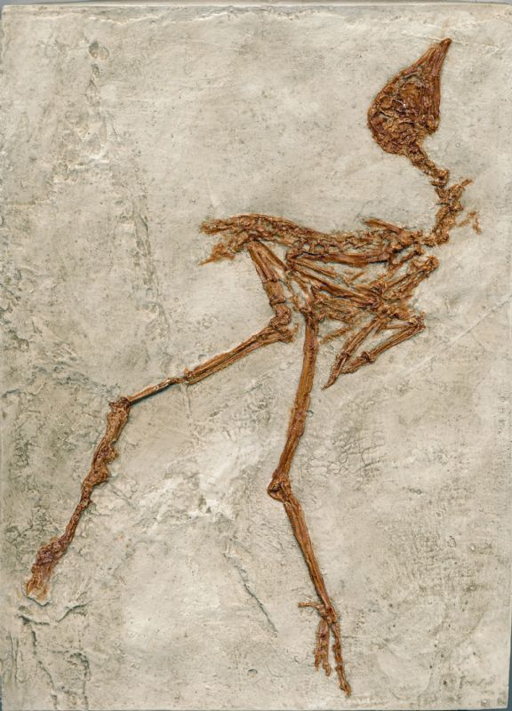 Fossil Reproduction of a Rail Bird.  NP Collectables